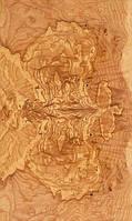 Шпон корень/кап оливкового ясеня, фото 1