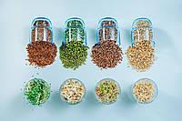 ПШЕНИЦА ТЕМНАЯ Микрозелень, зерно семена пшеницы органической для проращивания 200 грамм, фото 1