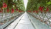 Тепличные лотки для выращивания ягод, овощей, зелени
