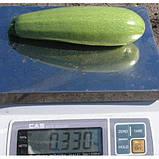 Асма F1 500 шт семена кабачка Clause Франция, фото 2
