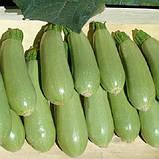 Асма F1 500 шт семена кабачка Clause Франция, фото 3