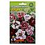 Гвоздика Грація однорічник насіння квіти, великий пакет 3 г, фото 3