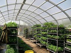 Выращивание растений в домашней теплице