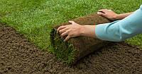 ЖИВАЯ ТРАВА В РУЛОНАХ – газон всего за 1 день