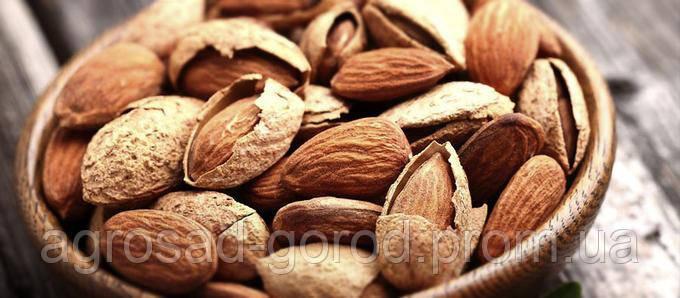 Саженцы ореха Пекан Кадо