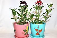 Керамический вазон для комнатных растений