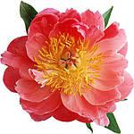 Для цветов и комнатных растений