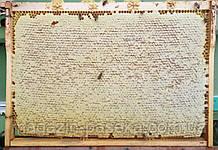 Консультации пчеловода