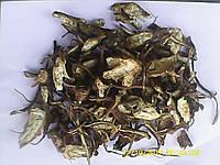 Бедренец (камнеломка) корень 100 грамм.