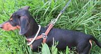 Светящийся ошейник ожерелье из жемчуга для собак и кошек разные размеры