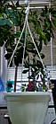 Горщик для квітів пластиковий підвісний з підвіскою 240мм (Білий ), фото 2