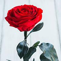 Стабилизированная роза в колбе Lerosh - Premium 33 см, Красная - 138931