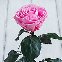 Стабилизированная роза в колбе Lerosh - Premium 33 см, Розовая - 138935