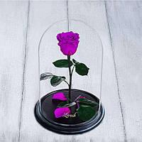 Стабилизированная роза в колбе Lerosh - Standart 33 см, Фиолетовая - 138924