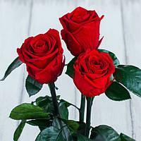 Стабилизированные три розы в колбе Lerosh - Standart 33 см, Красная - 138955