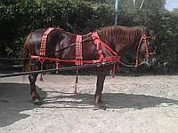 Упряж для лошади выездная Амуниция выездковая