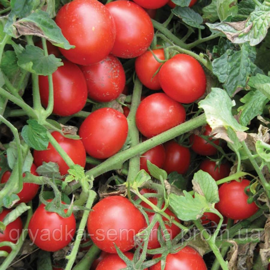 Томат Шкипер F1 Lark Seeds 1000 семян