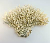 """Коралл """"кластер"""" (13см - 16см)"""