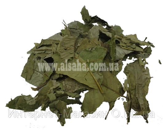 Листья Гуавы