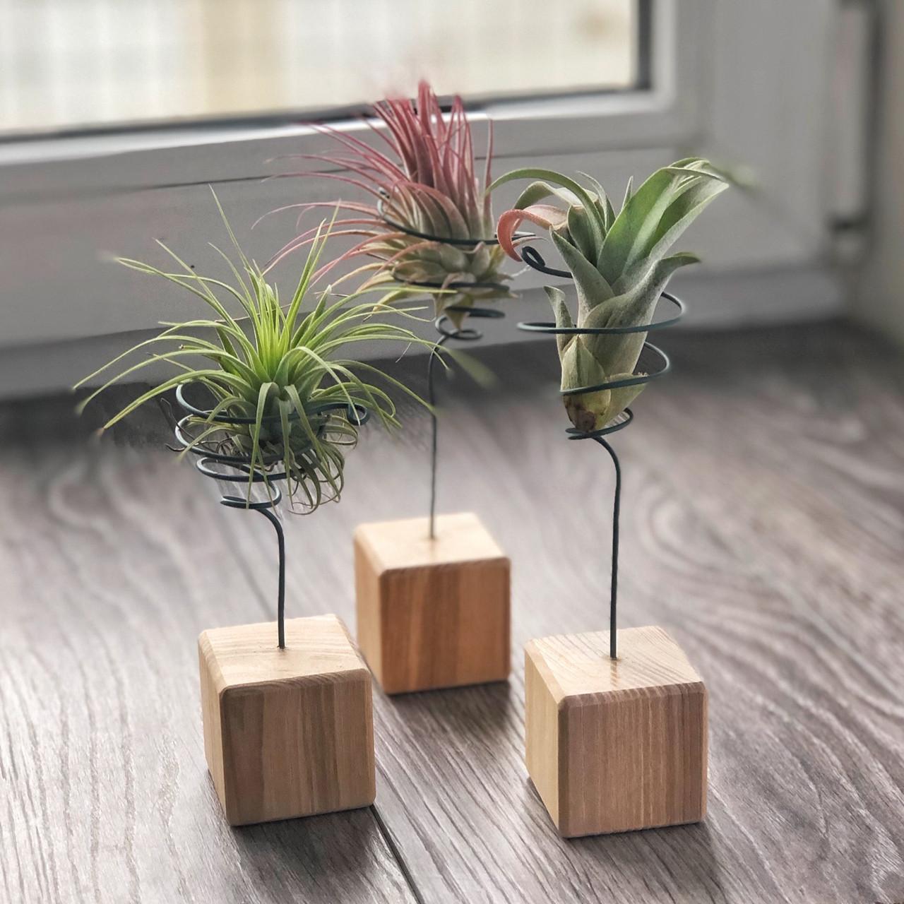 Подставки-кубики для Тилландсий - атмосферных растений