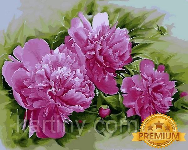 Картины по номерам 40×50 см. Babylon Premium Пион лекарственный Розеа Плена