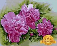 Картины по номерам 40×50 см. Babylon Premium Пион лекарственный Розеа Плена, фото 1