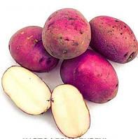 Картофель семенной Дивень, 1кг