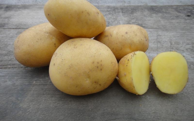 Картофель семенной Тоскана, 1кг