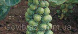 Семена капусты Абакус F1, 2500 семян