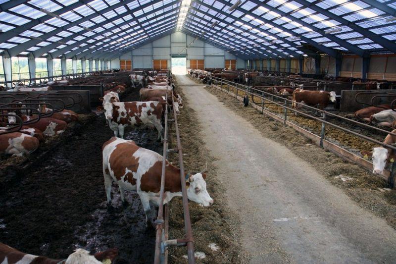 Будівництво,ремонт та реконструкція ферм ВРХ,свиноферм.пром будівель ю