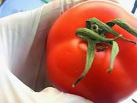На Київщині затримали 17 тонн овочів, заражений карантинним шкідником