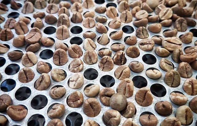 зачем зерна сортируютпо размеру, почему большие зерна кофе стоят дороже