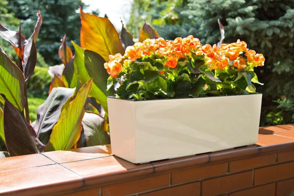 Кашпо пластикове ящик прямокутний квітник Бегонія (Кремовий)