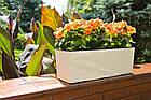 Кашпо пластикове ящик прямокутний квітник Бегонія (Мокка), фото 2