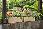 Кашпо пластикове прямокутне Бегонія РОТАНГ (Білий), фото 3