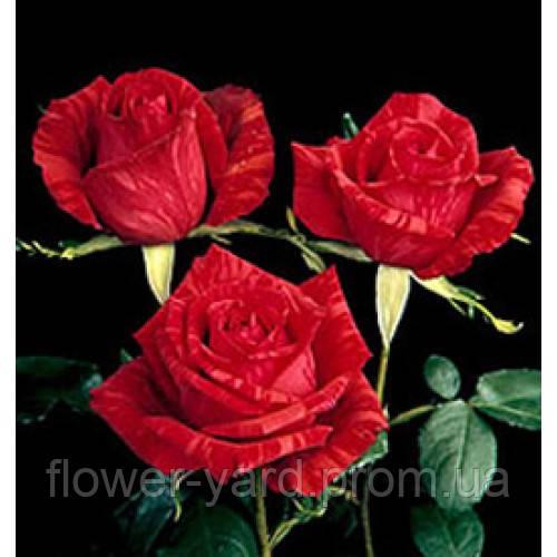 Интернет магазин цветов в бердянске, букет из белых тюльпанов и белых подснежников