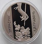 Монета Украины  5 грн. 2016 г. Петриковская роспись, фото 4