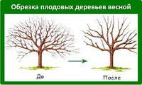 Техника обрезки плодовых деревьев