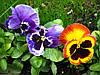 Правильное удобрение комнатных цветов