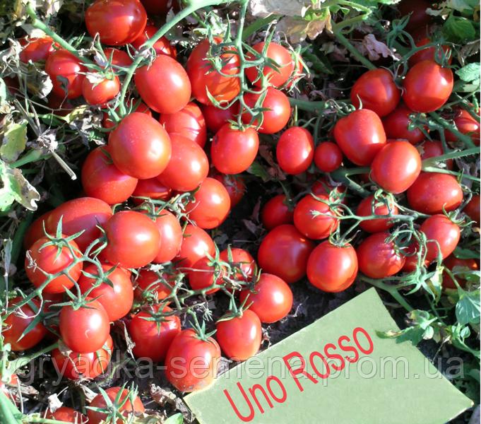 Томат Уно Россо F1 United Cenetics 10 000 семян