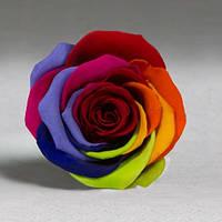 Стабилизированная роза в колбе Lerosh - Standart 33 см, Радужная - 138927