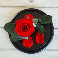 Стабилизированная роза в колбе Lerosh - Mini 27 см, Красная - 138908