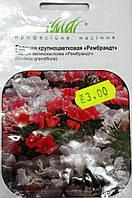 Семена  Годеция Крупноцветковая 0,3гр сорт Рембранд