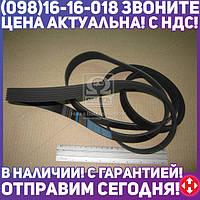 ⭐⭐⭐⭐⭐ Ремень поликлиновый 6PK2260 (производство  DONGIL)  6PK2260