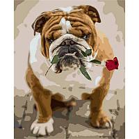 """Картина по номерам, картина-раскраска """"Английский бульдог с розой"""" 40Х50см Q1785"""