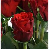 Роза Премиум, Н 77 см, силикон, Искусственный цветок, Днепропетровск, фото 2