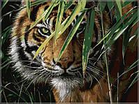 Картина по номерам MENGLEI Амурский тигр