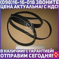 ⭐⭐⭐⭐⭐ Ремень поликлиновый 6PK2240 (производство  DONGIL)  6PK2240