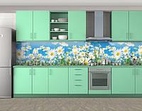 Ромашки и Небо, Защитная пленка на кухонный фартук с фотопечатью, Цветы, голубой