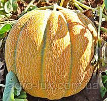 Семена дыни Эфиопка 10г